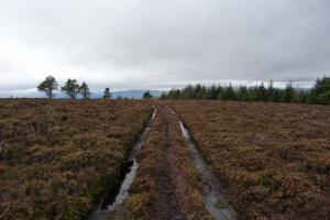 Cairnlich track
