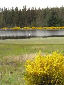 Pronie Loch Tillypronie (5)