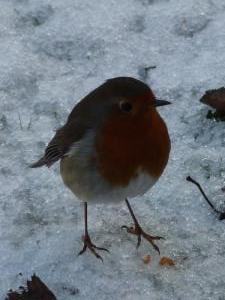 Robin at Ordie Bakery Cottage